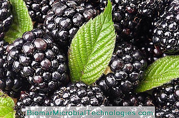 Black Mulberry (Morus Nigra), Black Berry