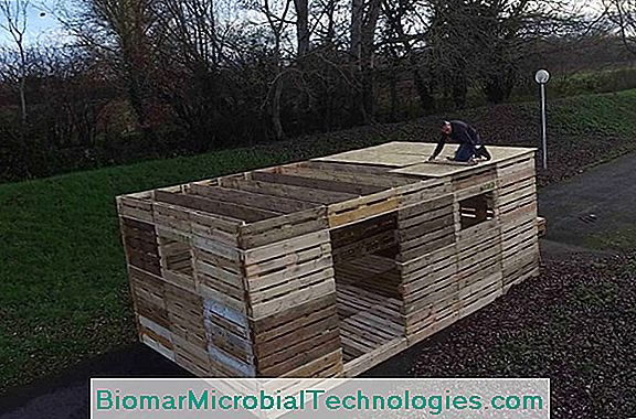 Video Livestock Shelter Made From Pallets For