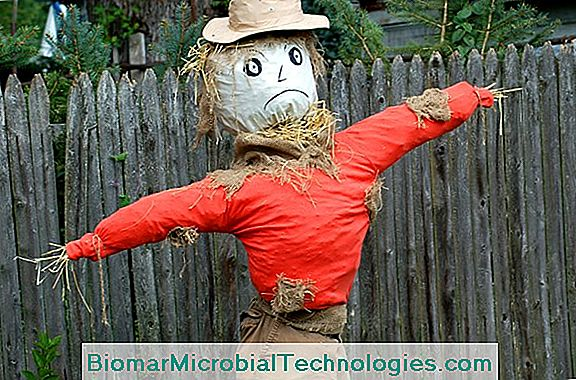 Video How To Make A Scarecrow Step By Craft Project