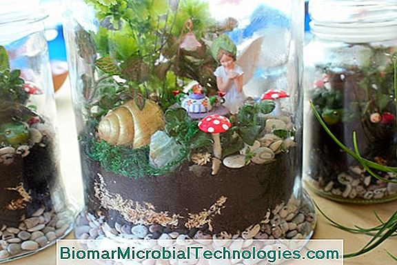 How To Make A Terrarium The Site Of The Practical Gardening 2019