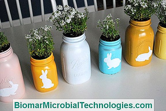 Xxl Jars And Planters: Look Great For Your Plantations ... Xxl Planters on