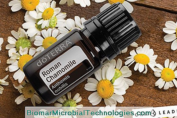 Roman Chamomile: A Plant That Soothes