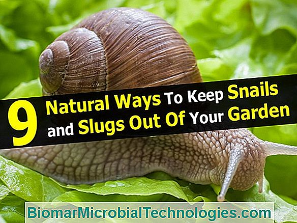 How To Get Rid Of Slugs And Snails From The Garden?