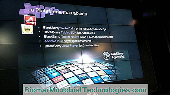 Blackberry: Beneficios Y Virtudes