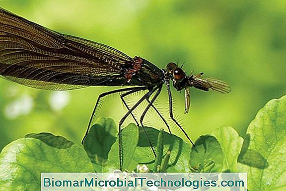 Biocontrol, Alternatywa Dla Glifosatu