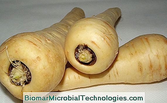 Parsnip (Pastinaca sativa), sweet and sweet root vegetables
