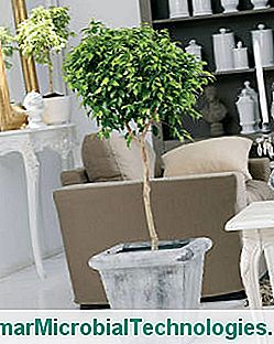 Easy Plants For A Healthy Interior
