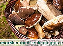 basket of porcini mushrooms