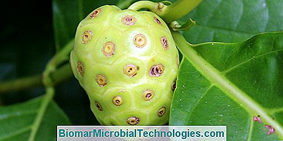 Noni Juice: Health Benefits And Assets