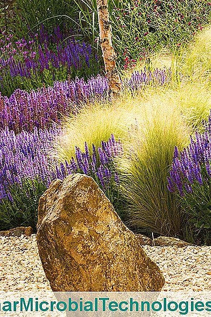 Grasses: 5 Superb Varieties