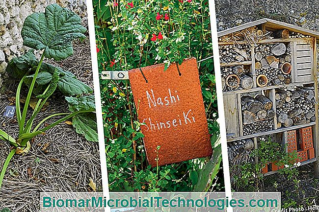 mulch insect hotel
