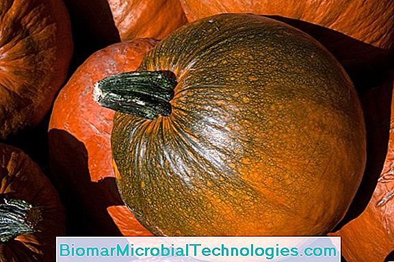 Cucurbitaceae Or Squash: A Large Family Of Varied And Colorful Vegetables
