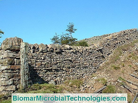 How To Build A Dry Stone Wall?