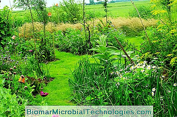 Permaculture In The Garden, What Is It?