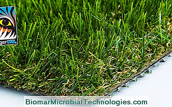 Synthetic Turf As True As Nature