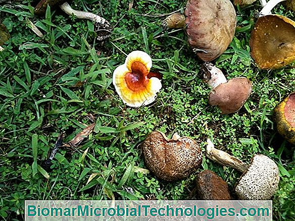 Mushrooms Are Invited To The Garden