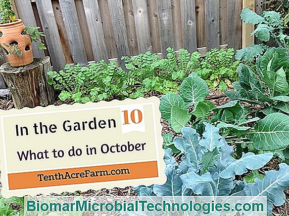 October In The Garden, What To Do