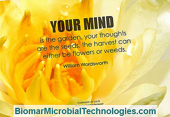 Thoughts For Your Garden