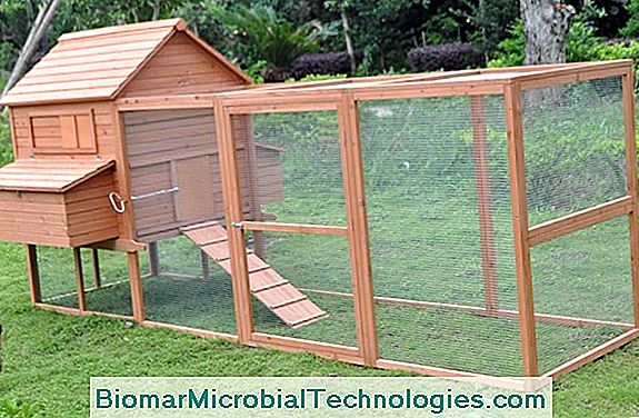 How To Make A Wooden Henhouse For The Garden?