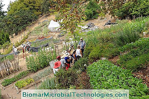 An Ecological Garden In A Sustainable World