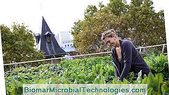 The Urban Agriculture Project In Paris: