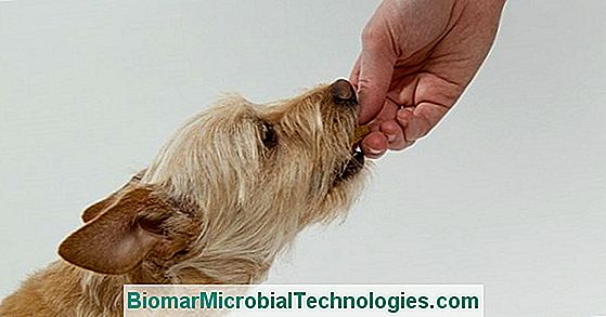 How To Use A Clicker With Your Dog: The Clicker Training Method