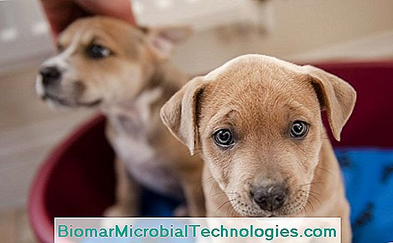 Parvovirus Disease In Dogs: Symptoms, Treatment And Prevention