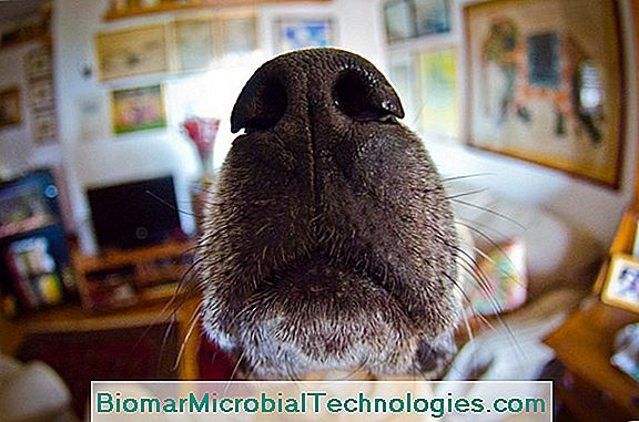 The Sense Of Smell In Dogs: What Does A Dog Really Smell?
