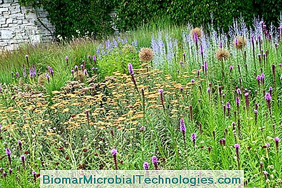Selection Of Robust Plants For An Indestructible Flower Bed