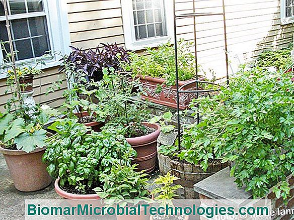 Vegetable Garden On The Balcony: The 10 Vegetables That Grow Well In Pots