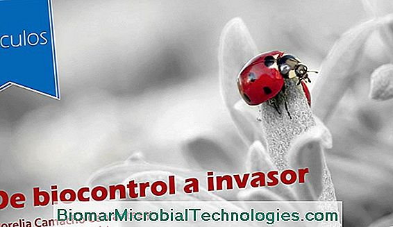 Biocontrol, Alternativa Glifosatu