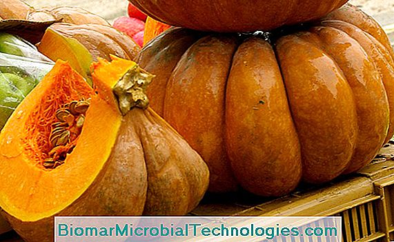 Butternut squash of Provence (Cucurbita moschata) or nutmeg squash: plantation and culture